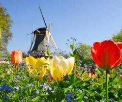 Nederland populair onder Duitse toeristen