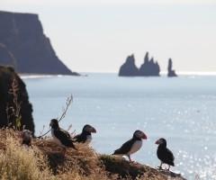 Een onvergetelijke vakantie-ervaring in IJsland