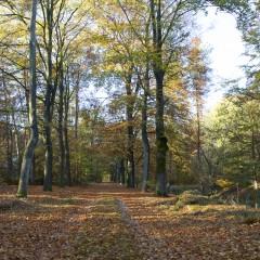 Een weekend naar de Veluwe