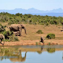De mooiste bestemmingen in Afrika, wij zetten ze op een rijtje