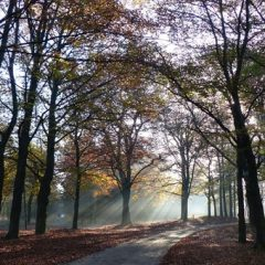 Ontdek Nederland per auto met je vrienden