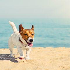 Waar je aan moet denken als je hond mee op vakantie gaat